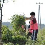 hamaichi_repo05